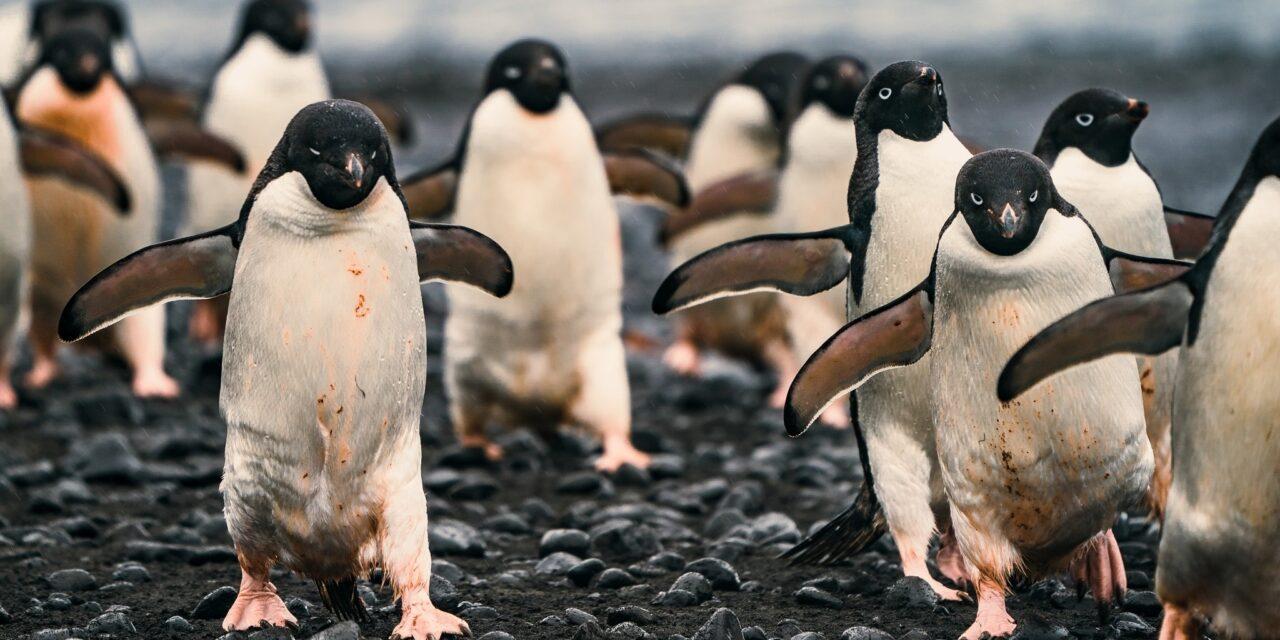 https://www.ipomehotels.com/wp-content/uploads/2021/01/Pinguini-Photo-by-Rod-Longa-on-unsplash-1280x640.jpg